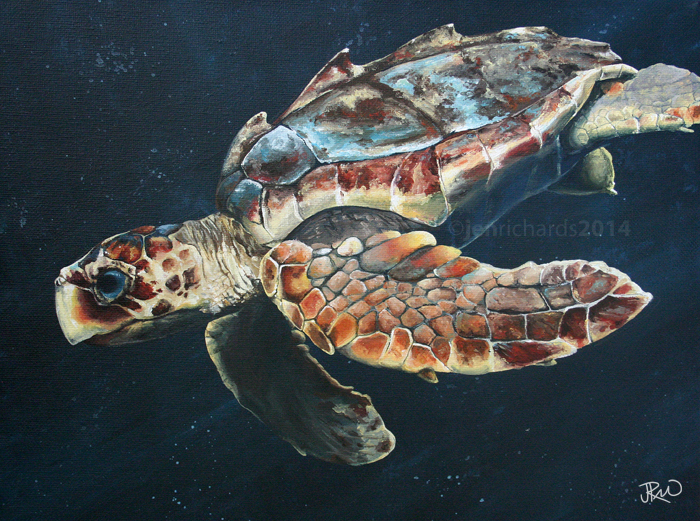 """T.J."" - Juvenile loggerhead sea turtle, 2014 Acrylic on canvas 12 x 9 inches  AVAILABLE"