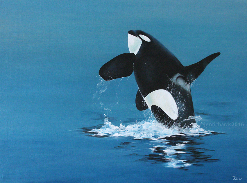 """Breach"" - Orca, 2016 Acrylic on canvas 24 x 18 inches  AVAILABLE"