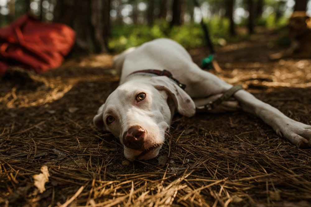 alabama-adventure-wedding-elopement-photographer-backpacking-with-dogs-camping-with-dogs-florida-adventure-elopement-photographer