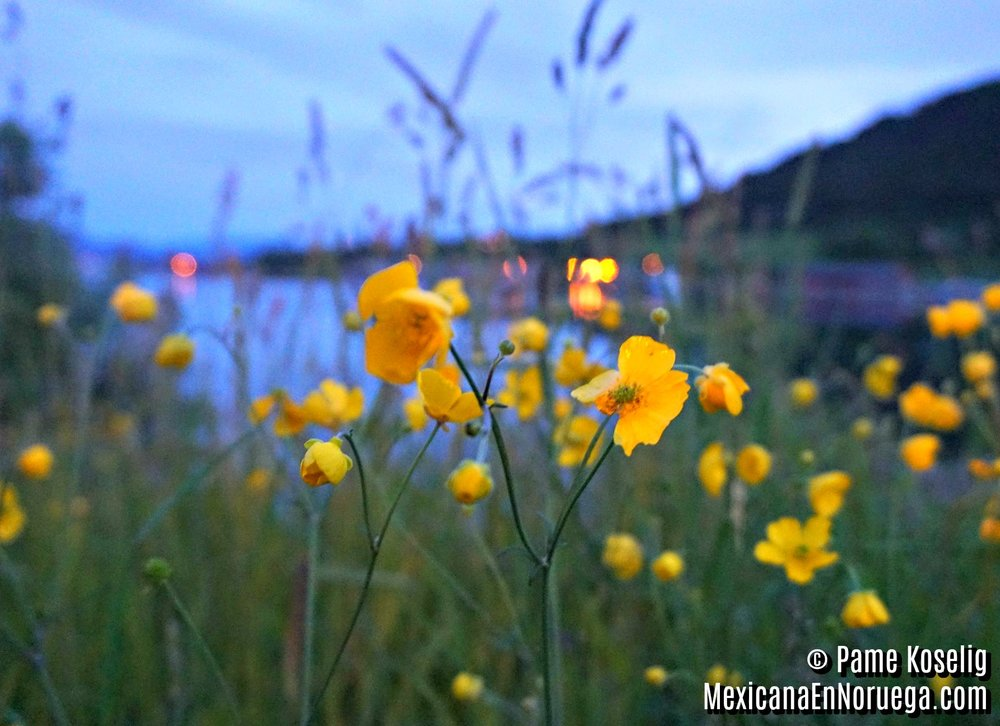 Flores Amarillas _ Pame Koselig _ Mexicana en Noruega.jpg