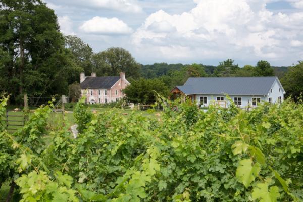 Zephaniah Farm Vineyard -