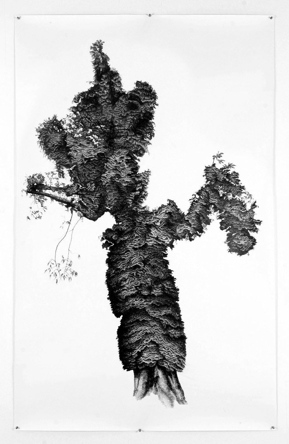Aesculus-Hippocastanum...   jpg