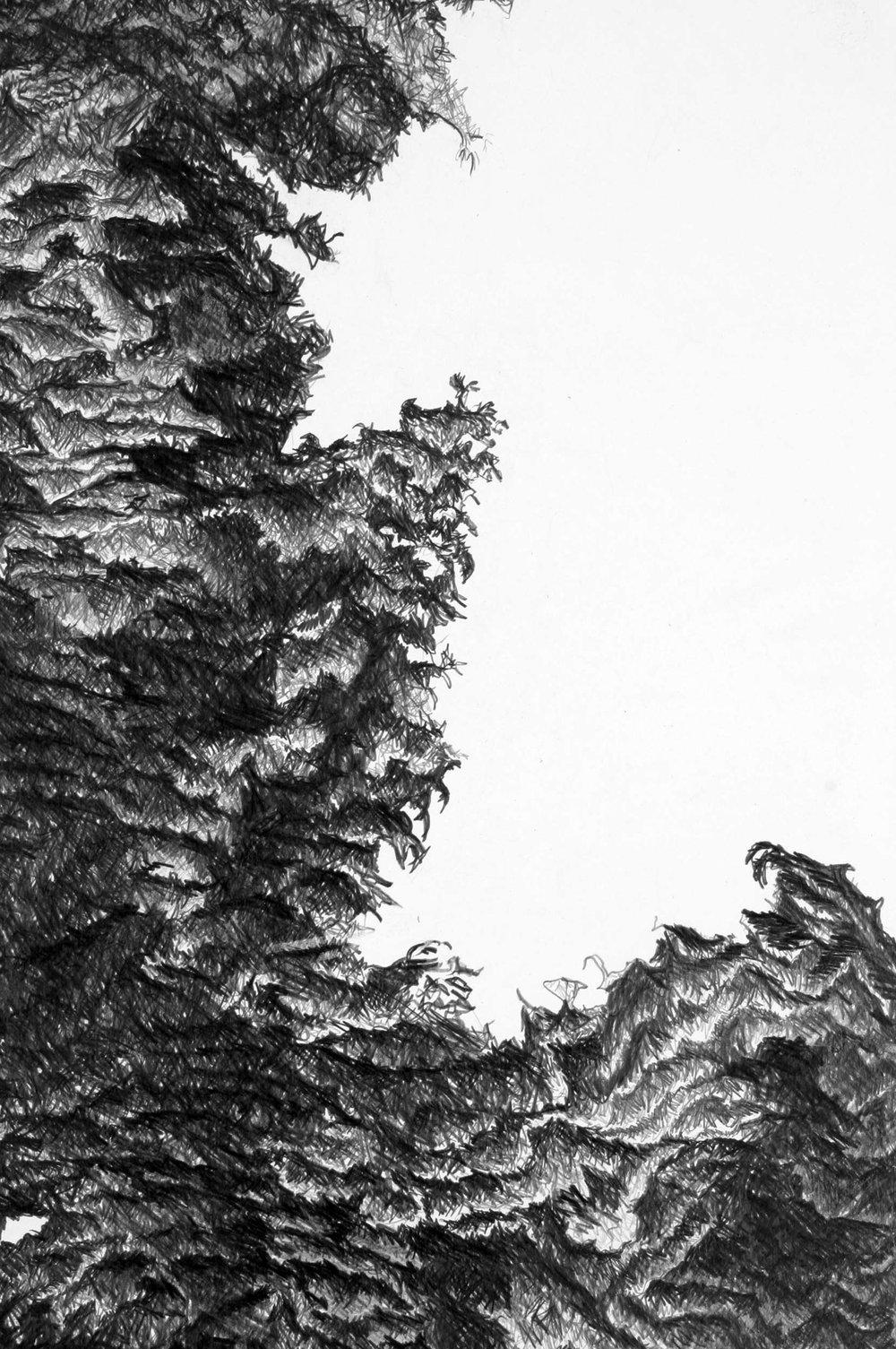 Aesculus-Hippocastanum...jpg