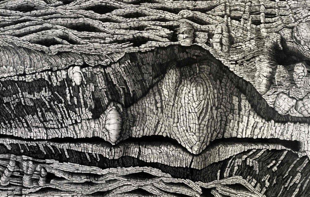 Maw,-Pencil-on-paper,-167.5-x-106.jpg