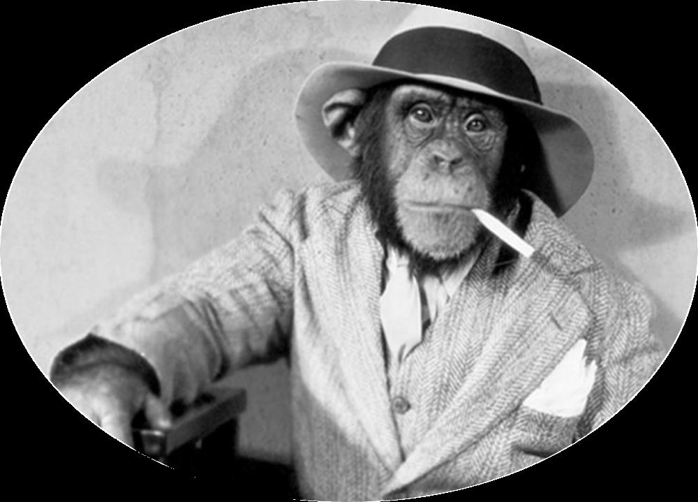 monkeyArtboard 1@300x.png
