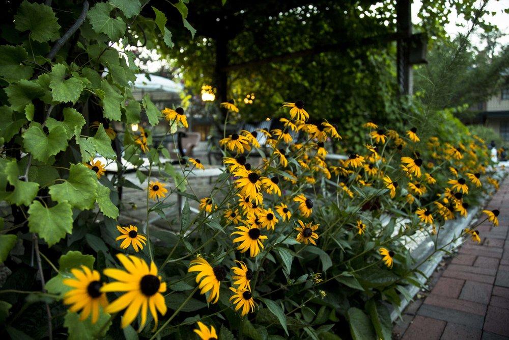 Flowers, Pearl Mill Flats, Durham condominiums