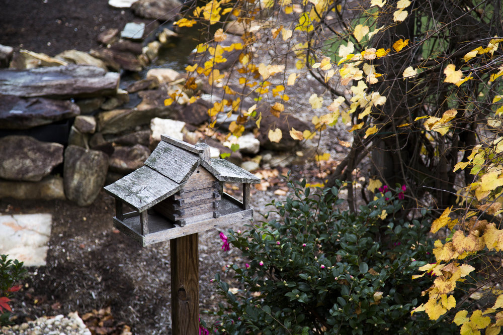 bird feeder and flowers, Pearl Mill Flats, Durham condominiums