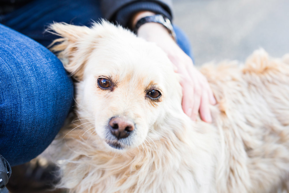 owner-caressing-gently-her-dog-PYVKCCH.jpg