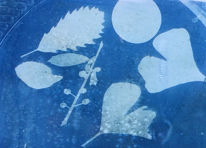 Cyanotype Photograph, made with photoreactive paper, water, and sunlight.  Learn this process during the Pool Project at Tuhey Pool and Catalina Swim Club.