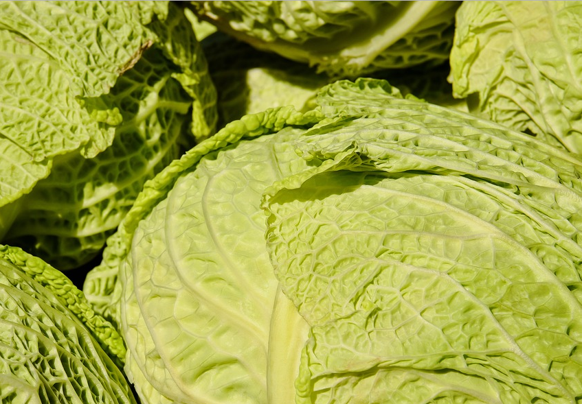 flat cabbage.PNG