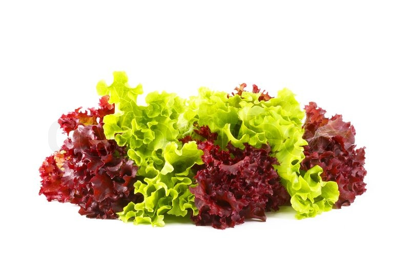 Red Leaf Lettuce and Green Lettuce