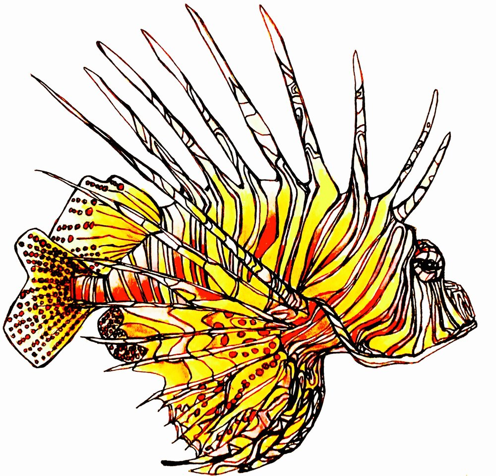 Lionfish / Full Color