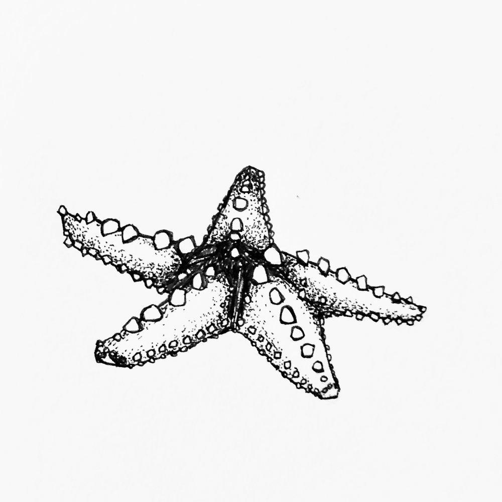 Inktober 2018: 08 Star