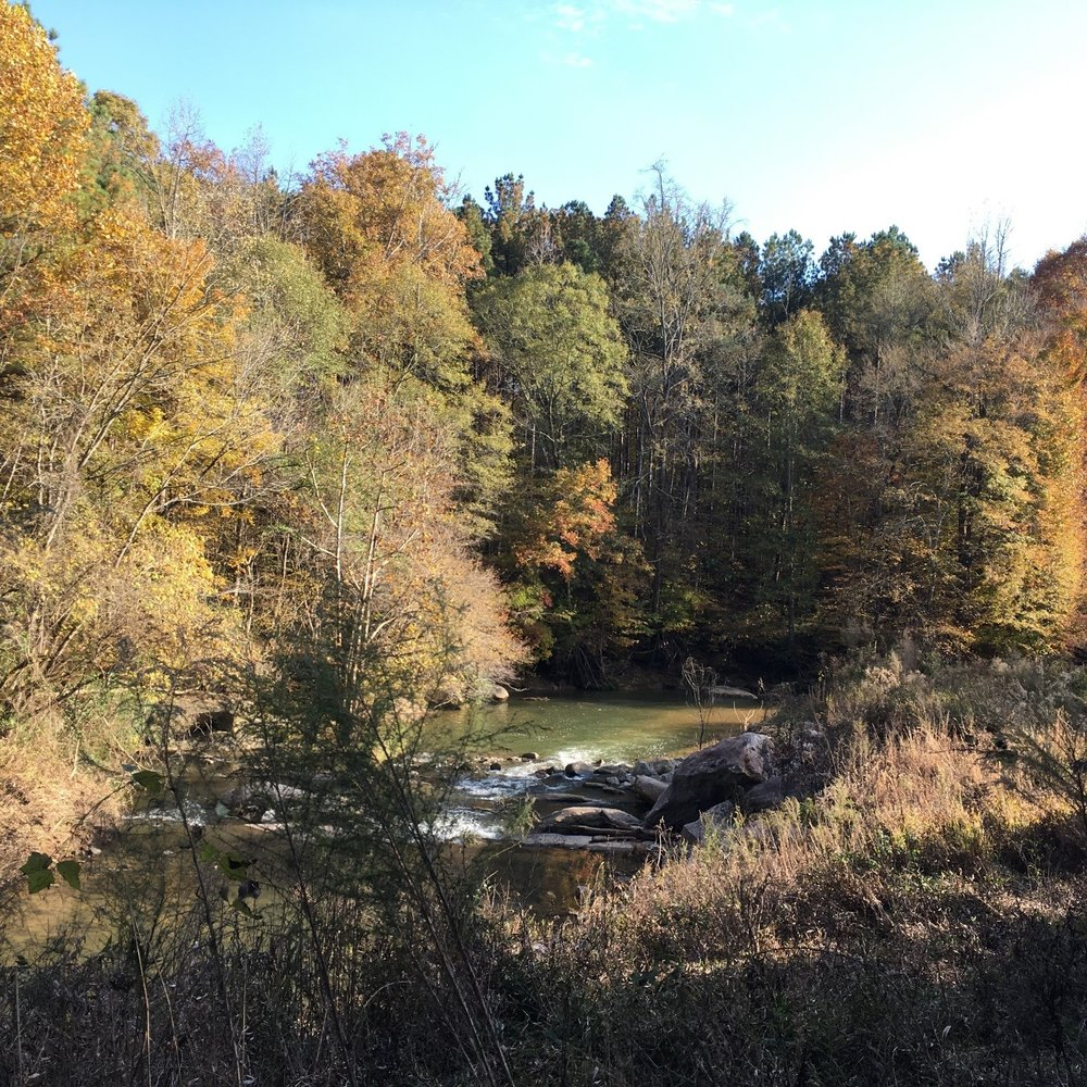 Fall color in Herbert Greene Nature Preserve
