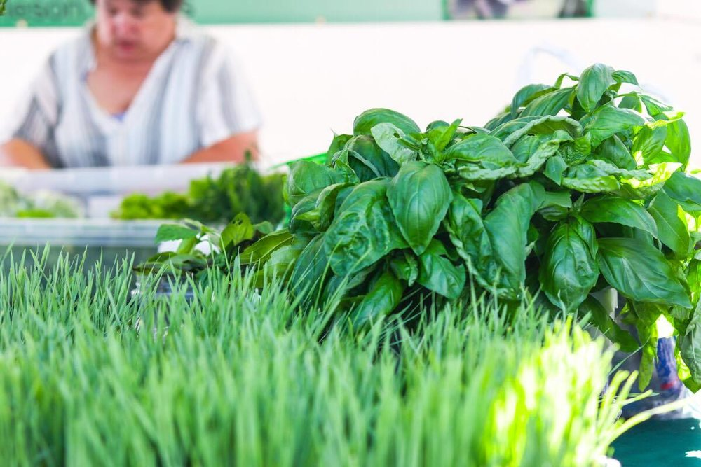 cu grass and basil.jpg