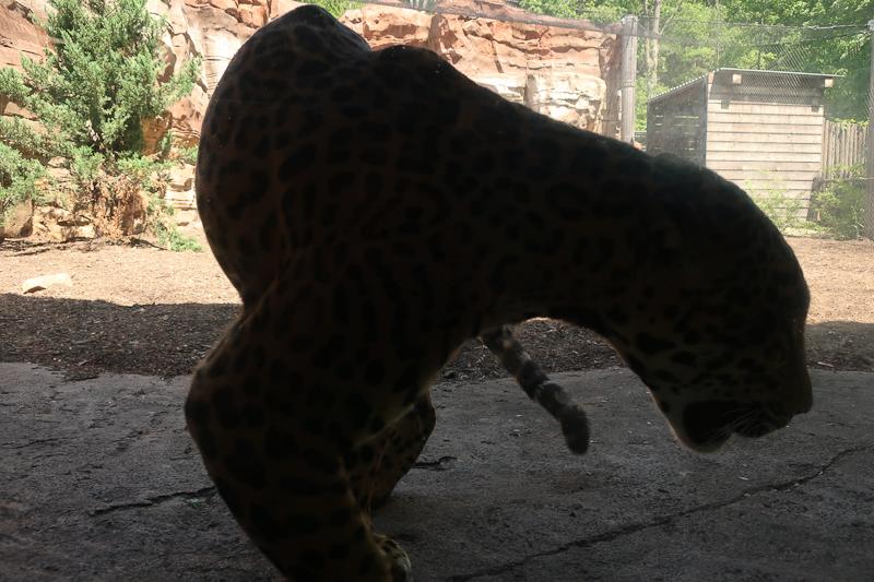 turtleback zoo-3373.jpg