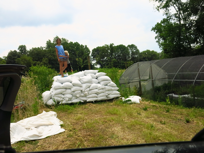 Two years ago, this kid and I loaded all these bags of soil from the bottom of the driveway to up by the hoop houses, July 10, 2016.