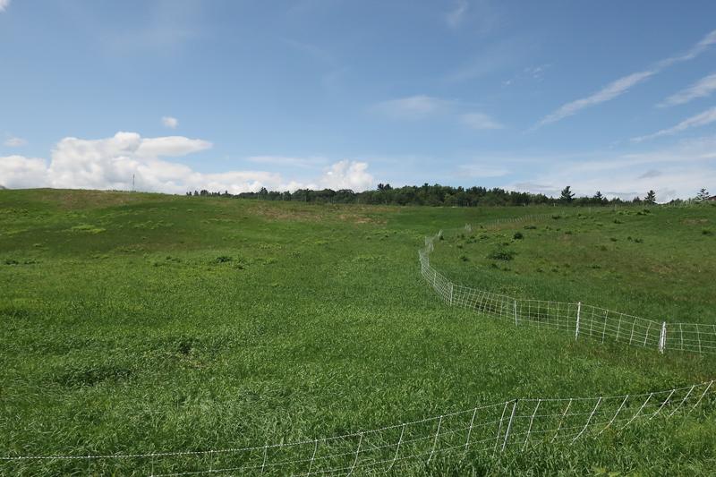 The pasture.
