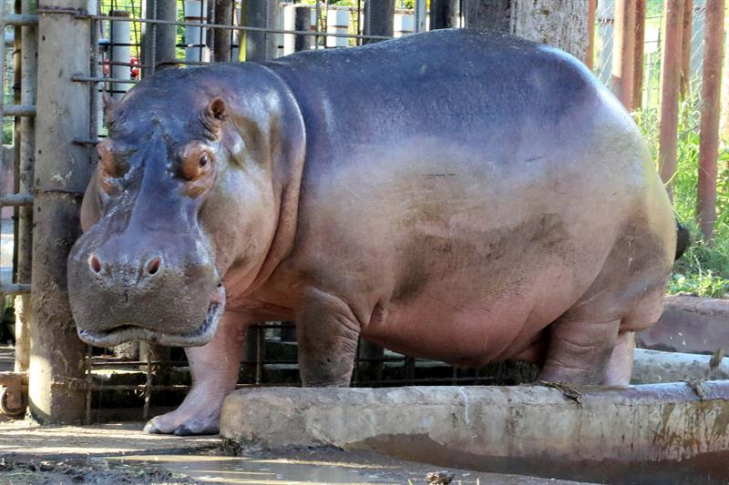 El %22Arca de Noé%22 busca salvar un zoológico que es herencia del narcotráfico en Honduras 3.jpg