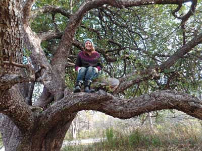 Laura Sieger in the Grasslings tree. Photo by John Bunker
