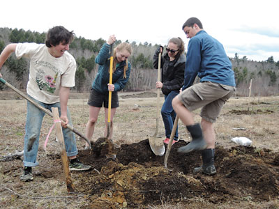 Colby College students digging in at this spring's Maine Heritage Orchard planting. Abby Verrier photo