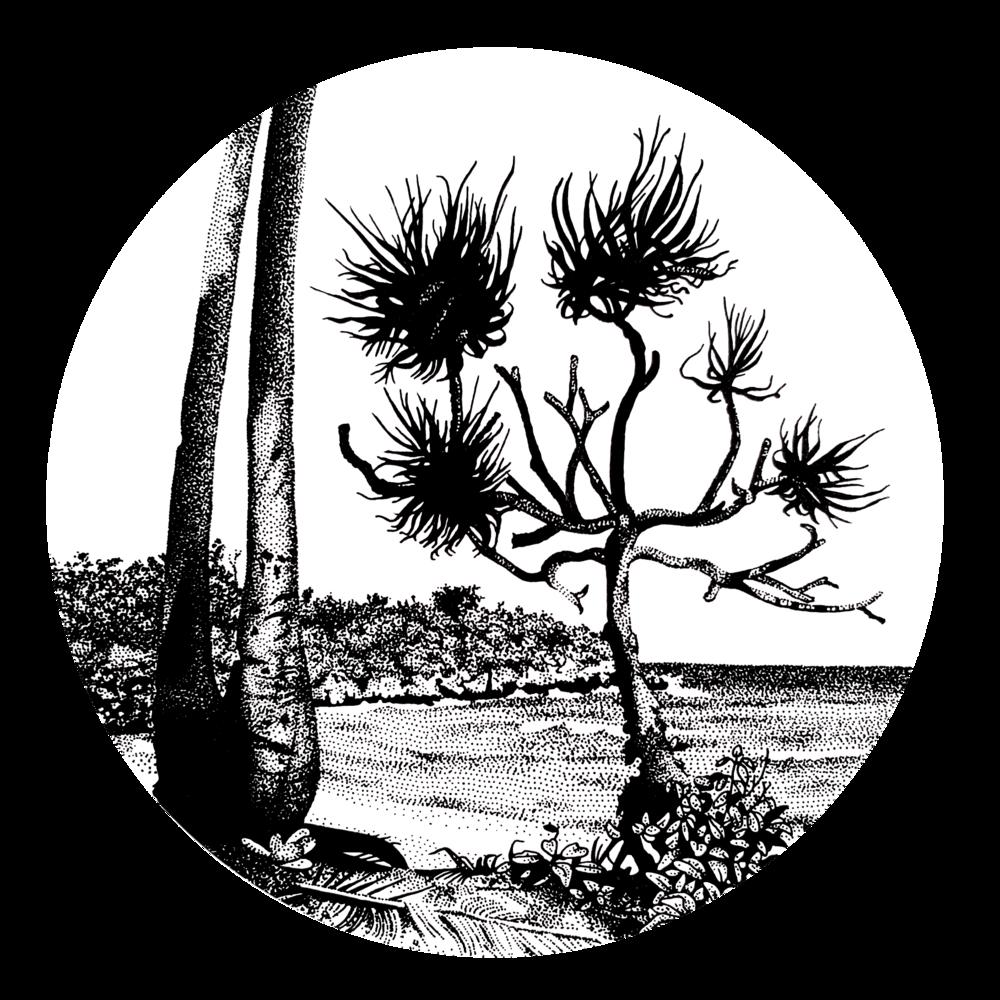 black-white-pen-ink-graphics-melbourne.png