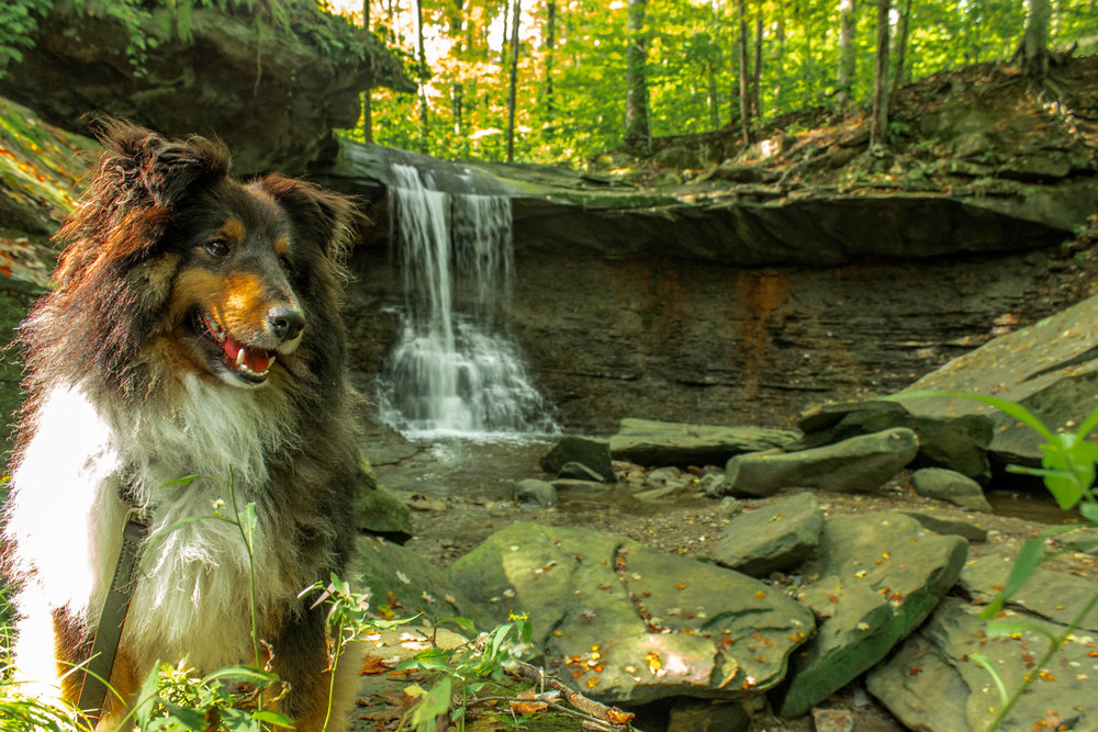 Blue Hen Falls: Cuyohoga National Park, Cuyohoga Ohio