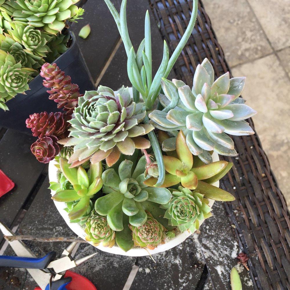 Succulent centerpieces : Dawson Delgado Wedding 2017