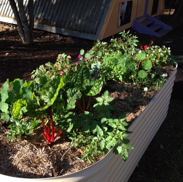 vege garden.png