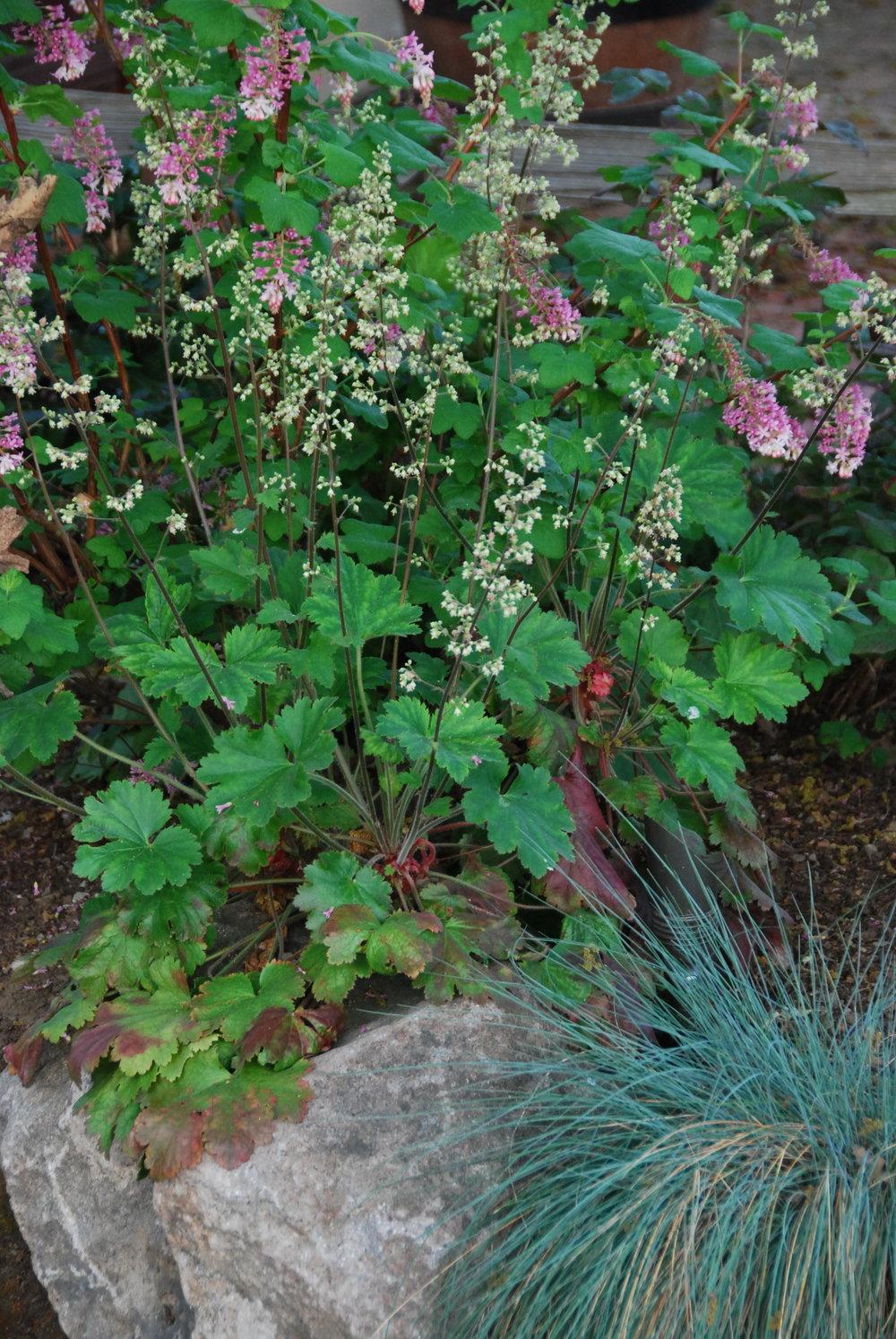 front_garden-closeup2.JPG