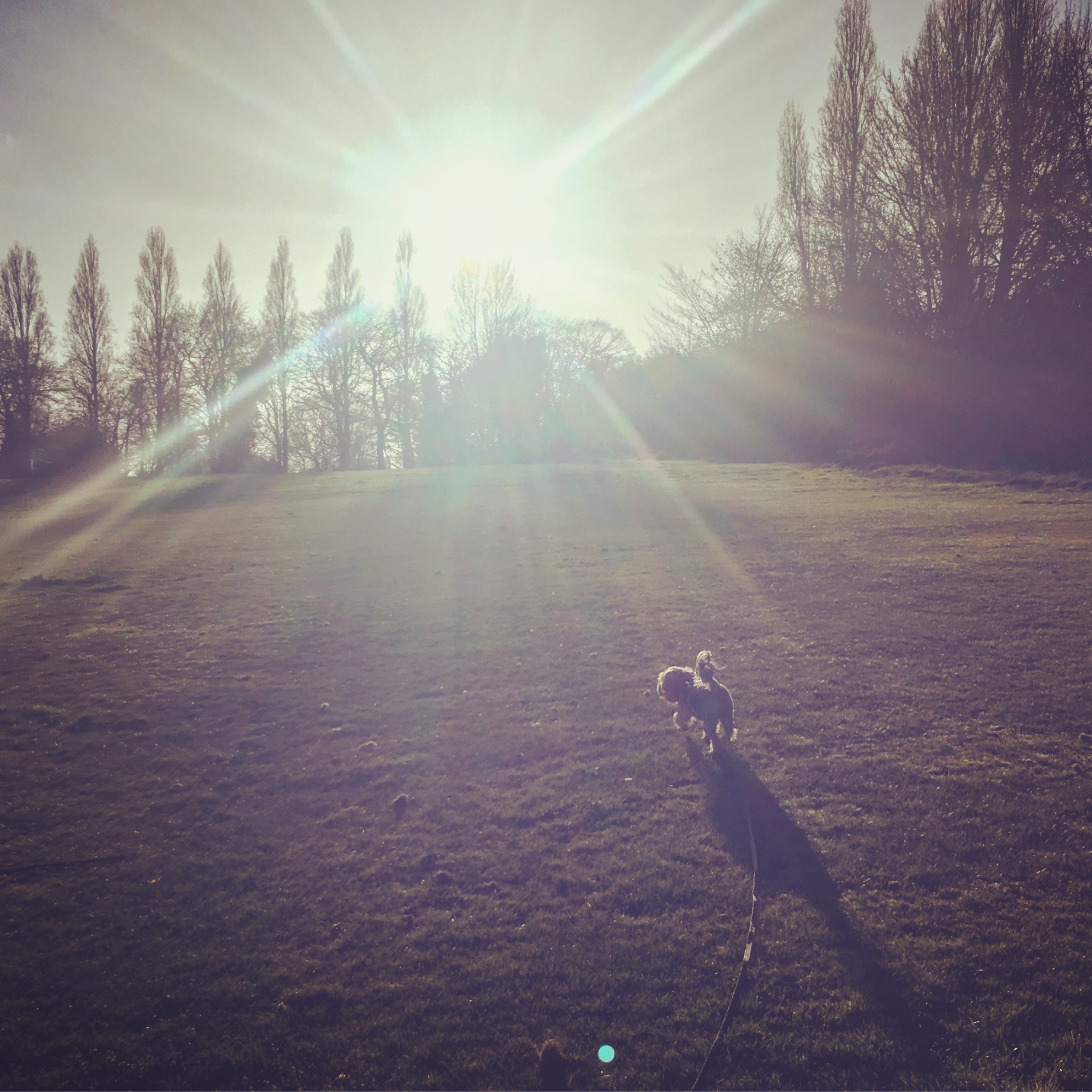 Our dog running into beautiful sunlight in the park near our new house. We explored here a lot before moving house