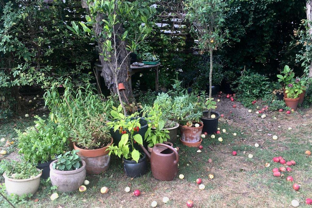 Krukker under æbletræet.jpg