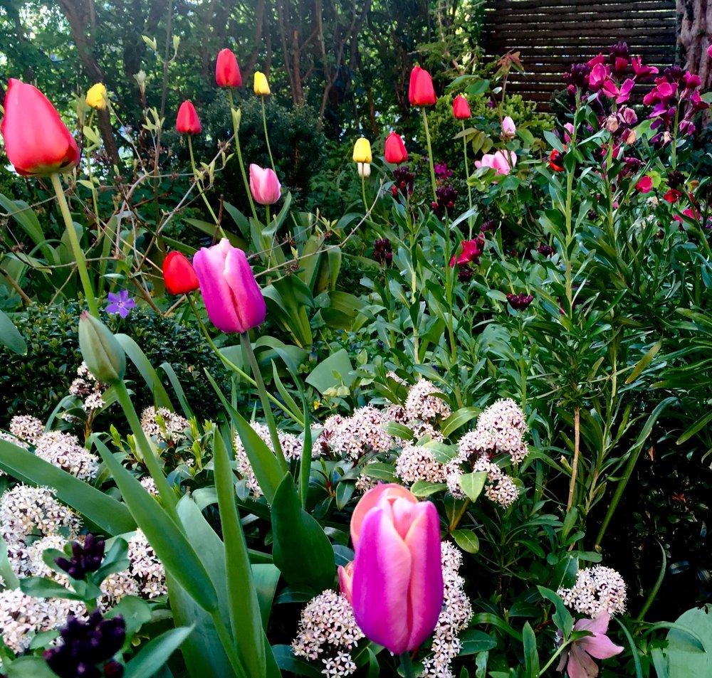 I forhaven supplerer jeg med lidt nye løg hvert år. Allerede da vi flyttede ind, lå de insisterende gule og røde Appeldoorn-tulipaner, som i modsætning til mange af de nyere sorter, aldrig forsvinder. Hvis jeg synes, at farvesammensætningen bliver for hidsig, sender jeg bare min datter ud at plukke de gule. Hun elsker tulipaner.