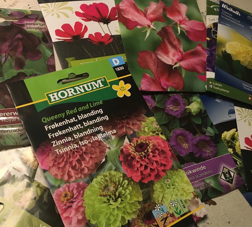 Blomsterfrø hvordan så