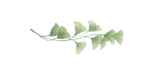 Annabella-leaf1.jpg