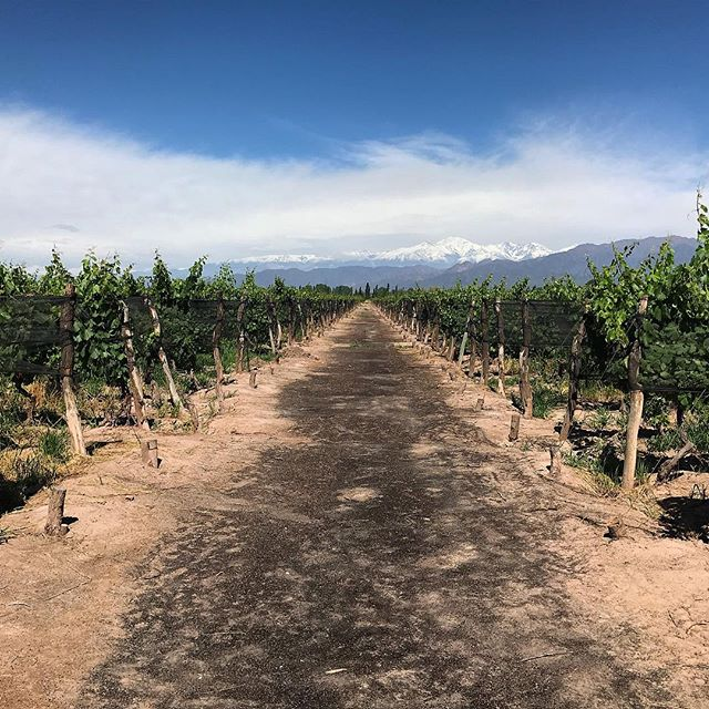 Out in wine country. #argentina #mendoza #exploreeverything #500px