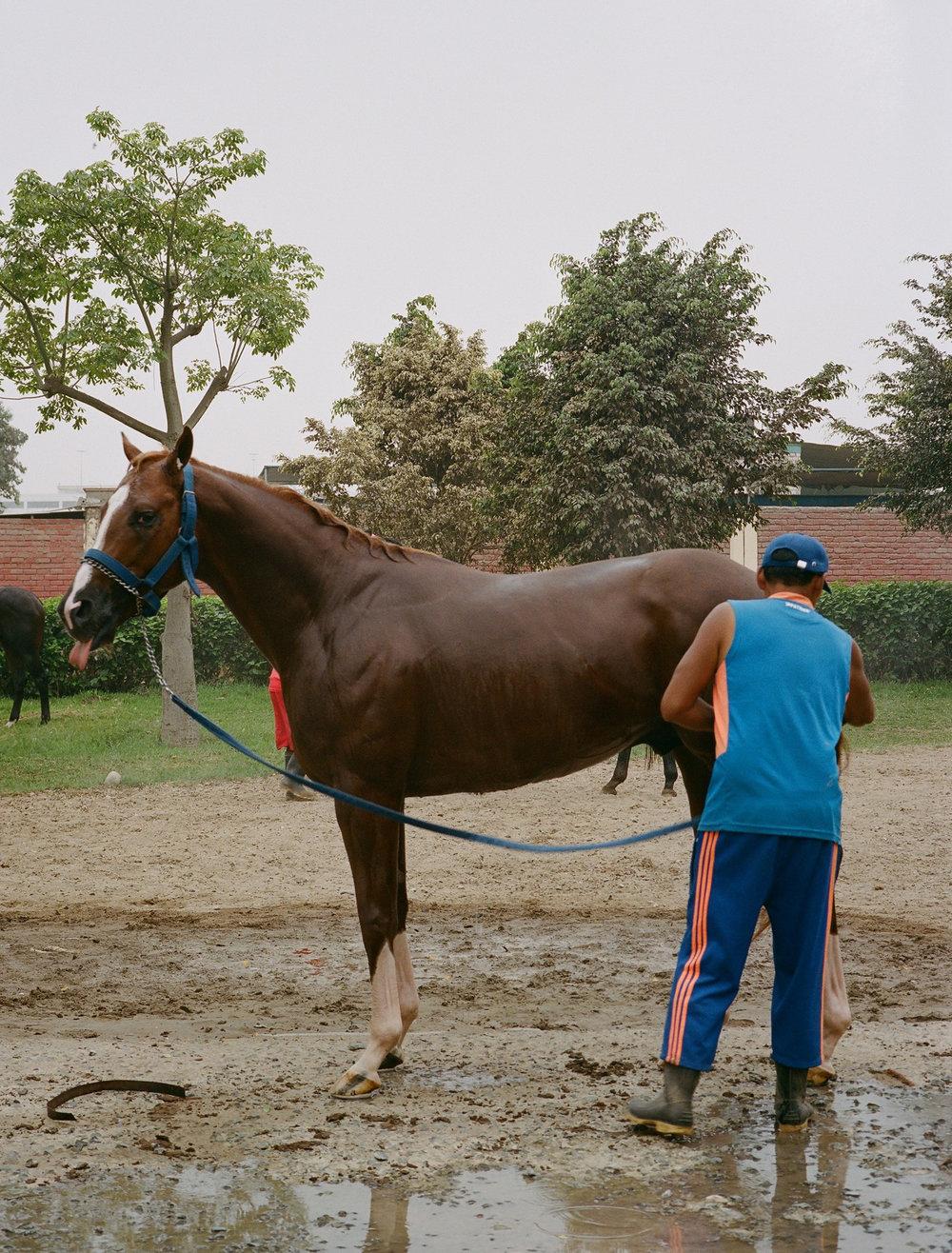 JockeysWeb21.jpg