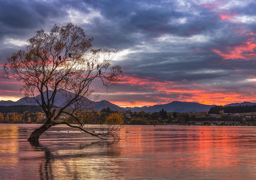RisingSun_over_lake_with_lone_tree.jpg