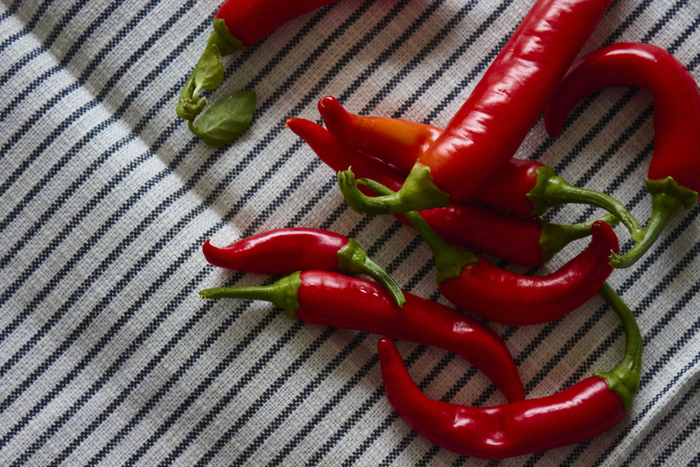 Spicy Homemade Chili Oil - the harvested chilies from my balcony, so pretty   In Carina's Kitchen