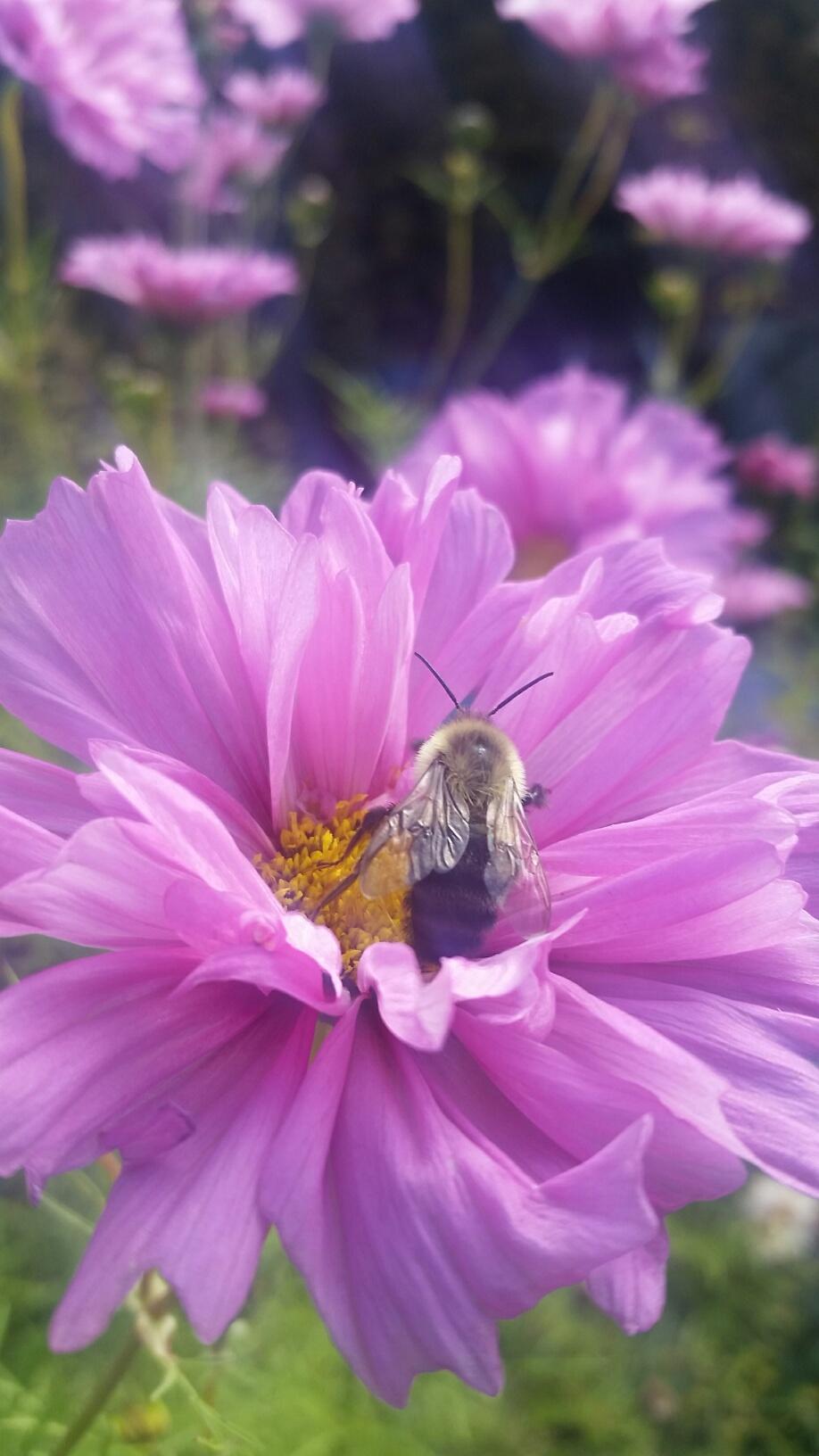 bee flower.jpg