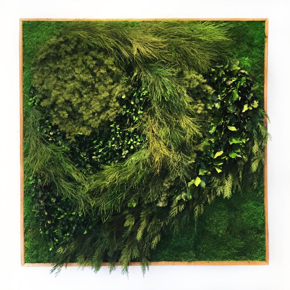 """Wonderlust Wall Garden II""  2018, Preserved Plants and Wood, 48 x 48 in."