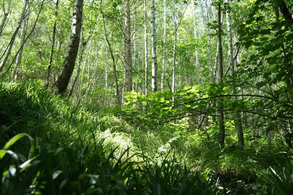 Glyn Cuch woodland