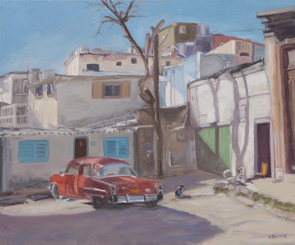 Gato - Havana, Cuba