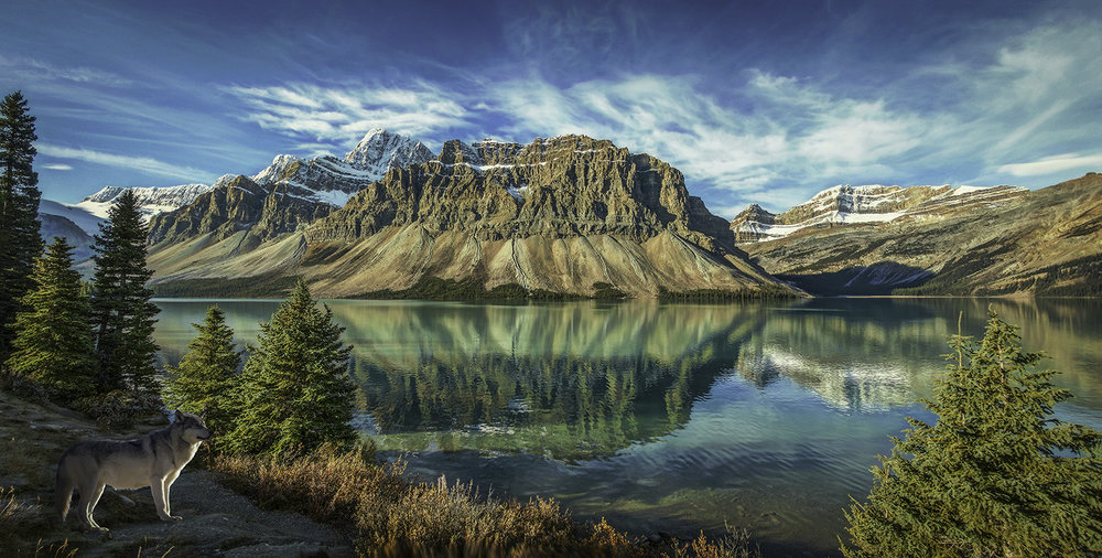 Untitled_Panorama-rockies-wolf-website.jpg