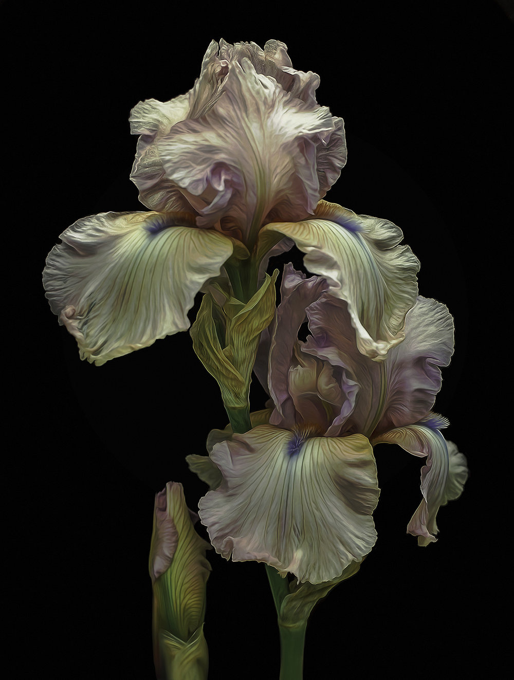 _MG_9810-4-iris-website.jpg
