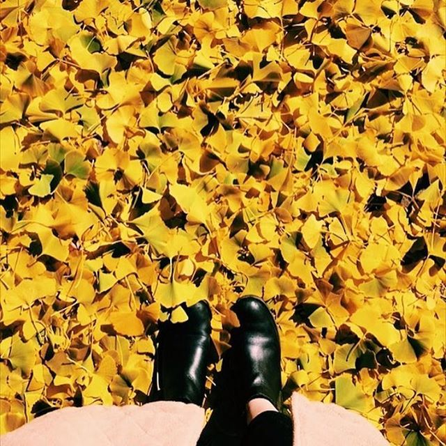 Ready to say goodbye to summer and welcome in all things fall 🍂 This is from last year on a magical day outside of my apartment where all the leaves fell yellow from our tree and covered the ground like a blanket! Everyone posted about it because it was so beautiful. I need it again!!
