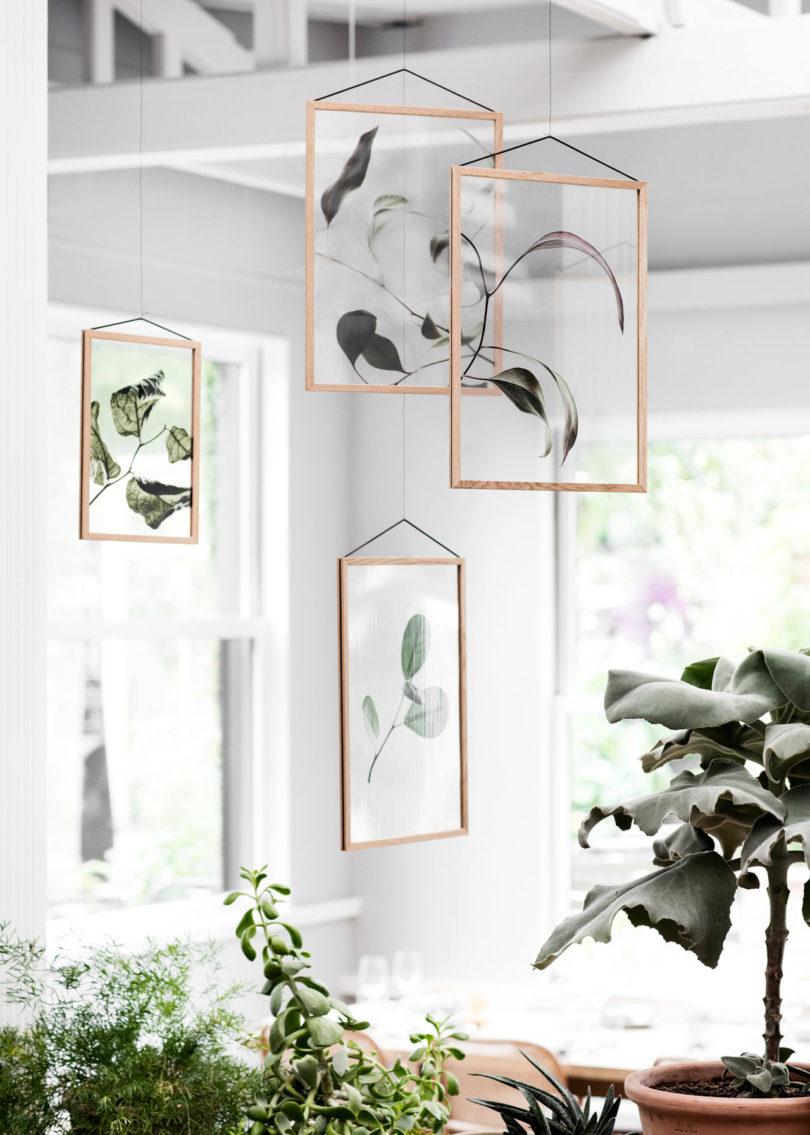 Moebe Plants.jpg