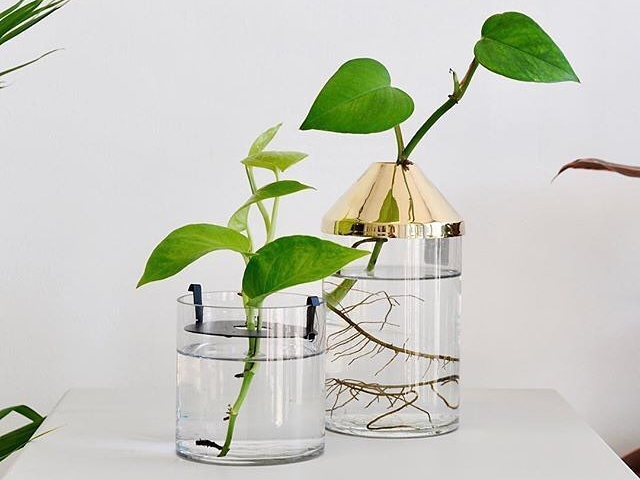 Zakkia Botanical Vase