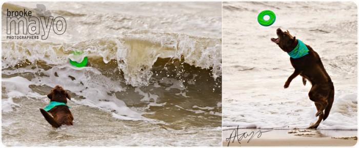 corolla_beachportraits_1
