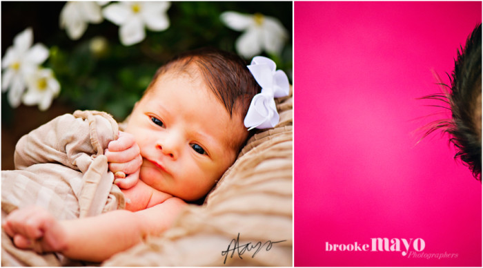 New Bern newborn portraits